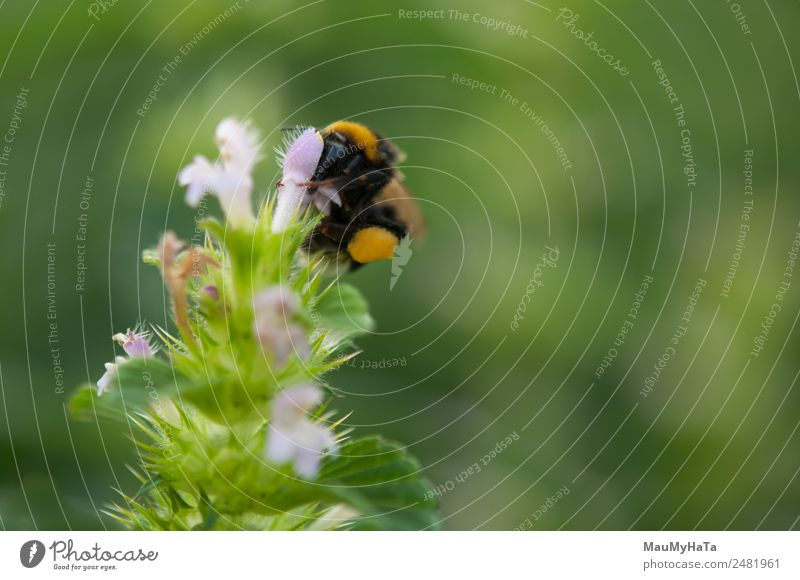 earth bee Nature Summer Plant Flower Animal Leaf Forest Eating Autumn Spring Blossom Movement Grass Garden Park Field
