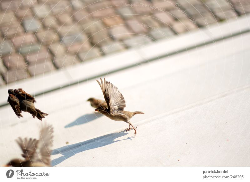 dividing sparrows from the nightingales Environment Earth Places Stairs Street Animal Wild animal Bird Wing Sparrow 4 Stone Concrete Line Flying Cute Brown Gray