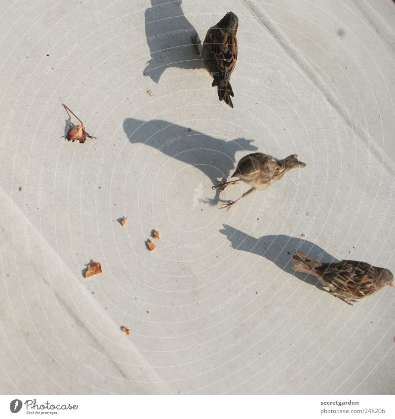 who will love a little sparrow? Environment Earth Leaf Places Bird Sparrow 3 Animal Concrete Line Crouch Cute Brown Gray Trust Appetite Voracious Expectation