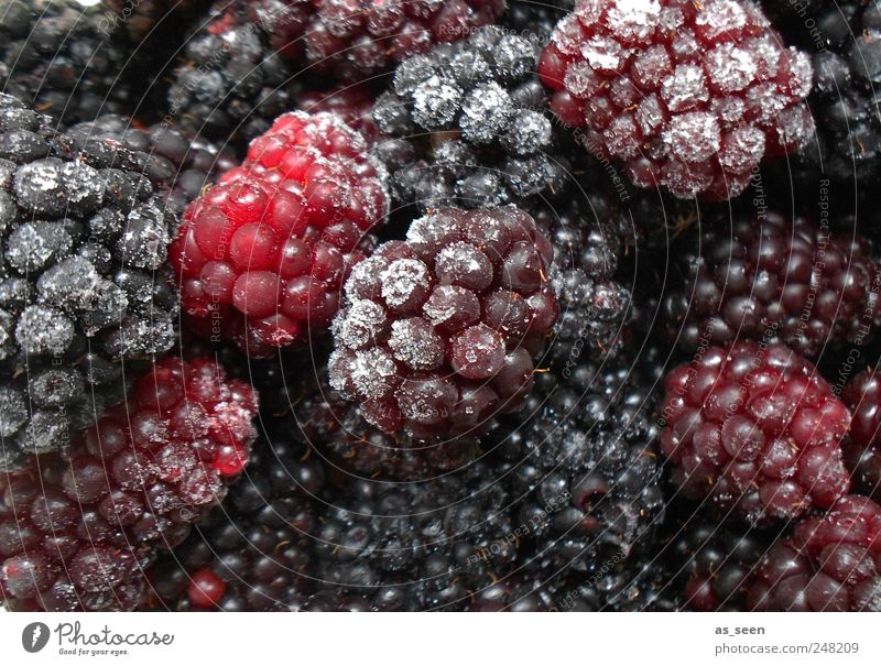 Blackberries ice blue violet Food Fruit Nutrition Ice Frost To enjoy Esthetic Healthy Eating Cold Blue Brown Violet Pink Red White Colour photo Interior shot