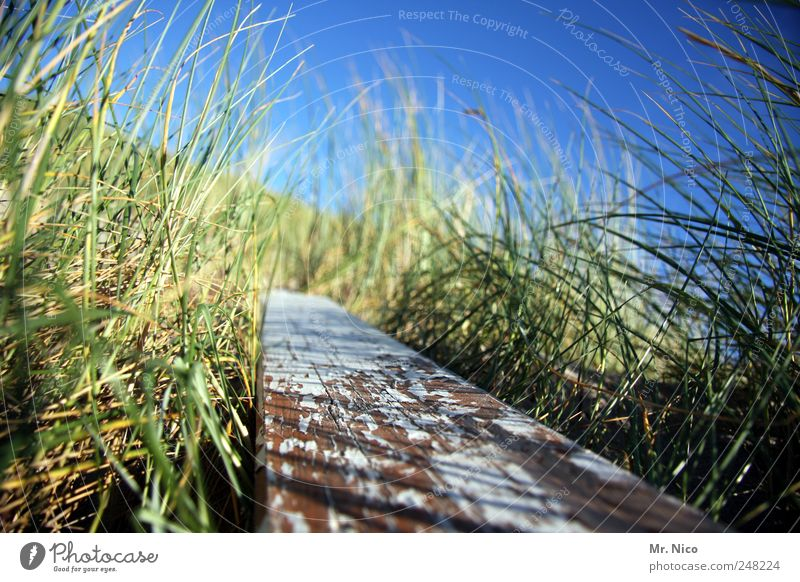 Nature Green Plant Environment Wood Grass Coast Wind Natural Bushes Dune Common Reed Decline Beautiful weather Wooden board Varnish