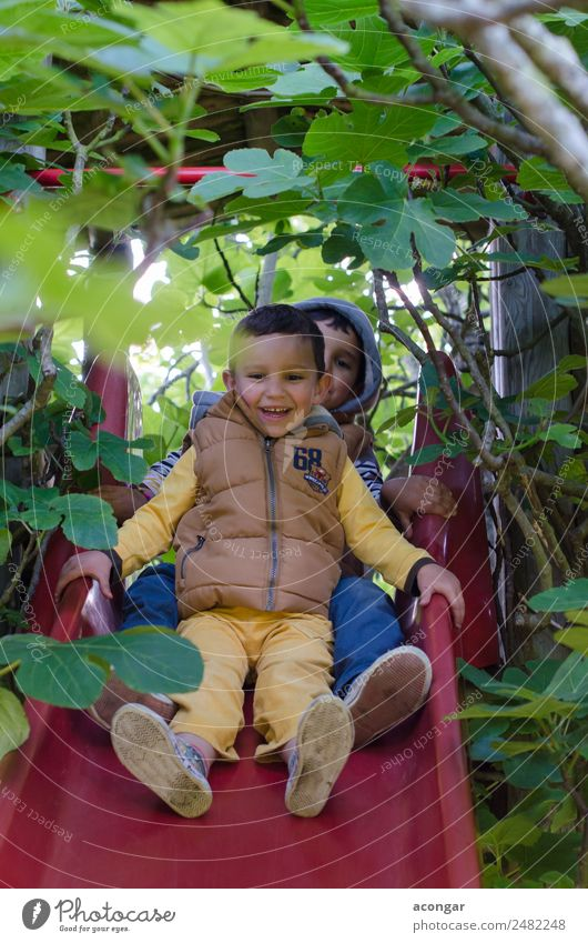 Two brothers have fun Child Nature Tree Joy Love Funny Happy Boy (child) Playing Together Friendship Happiness To enjoy Downward Vertical Playground