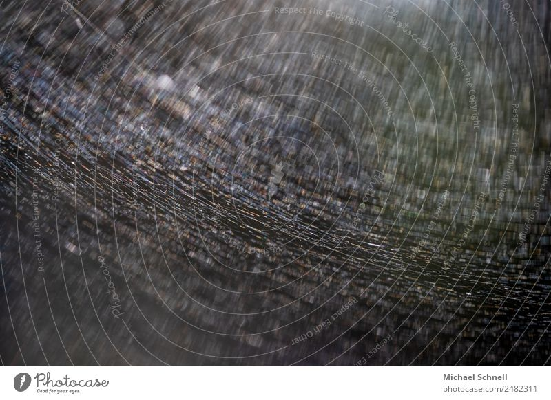 Spider's web and sunbeams Environment Nature Exceptional Dark Thin Creepy Sunbeam Colour photo Exterior shot Close-up Macro (Extreme close-up) Abstract Deserted