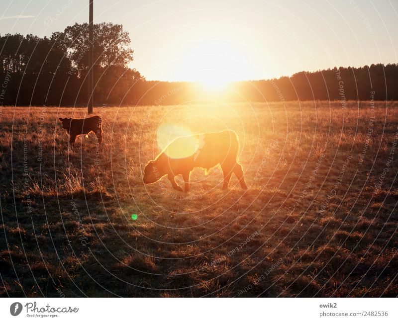Nature Summer Plant Landscape Sun Tree Animal Calm Far-off places Baby animal Warmth Environment Meadow Grass Bright Horizon