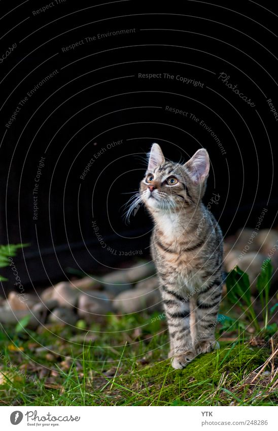 Nature Plant Leaf Animal Grass Garden Environment Cat Observe Curiosity Concentrate Discover Hunting Moss Watchfulness Testing & Control