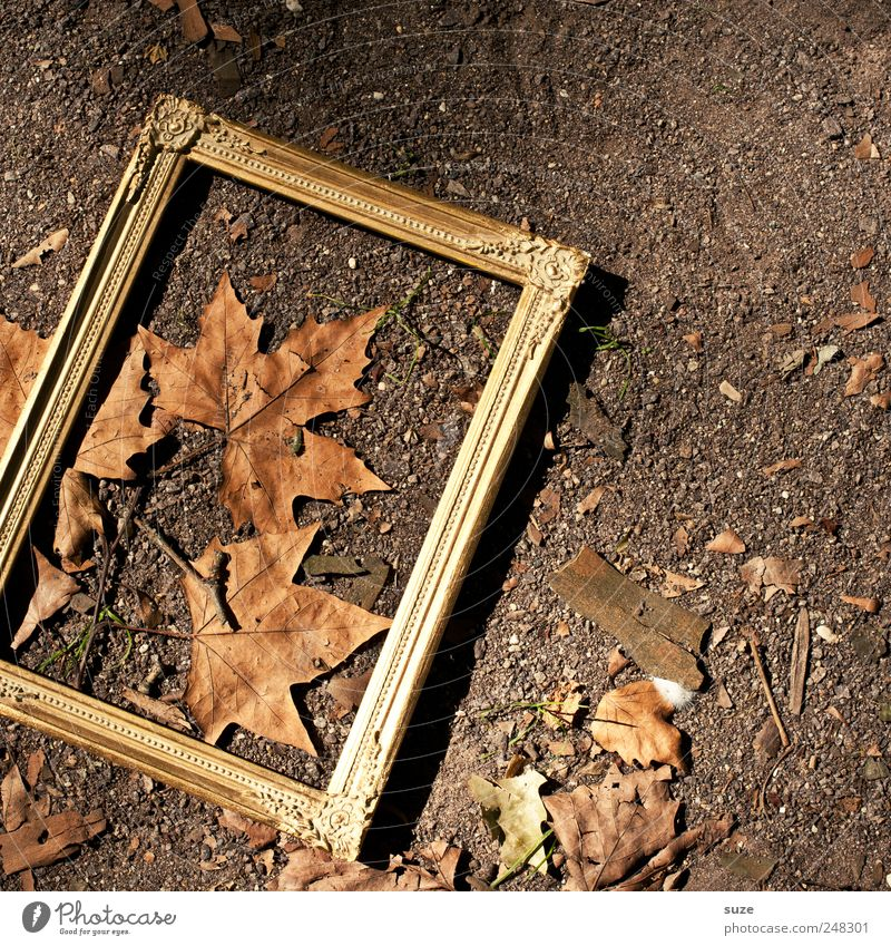 autumn picture Environment Nature Autumn Beautiful weather Leaf Exceptional Dirty Natural Brown Gold Autumn leaves Ground Picture frame Frame Noble Bronze