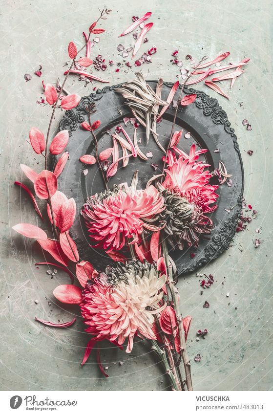 Flowers Still Life Composing Style Design Living or residing Decoration Bushes Bouquet Ornament Retro Pink Twigs and branches Chrysanthemum Pastel tone Plate