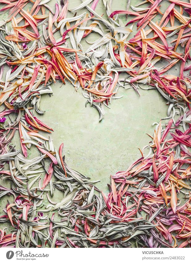 Flowers heart with petals Style Design Summer Feasts & Celebrations Nature Plant Leaf Blossom Decoration Ornament Heart Love Pink Background picture