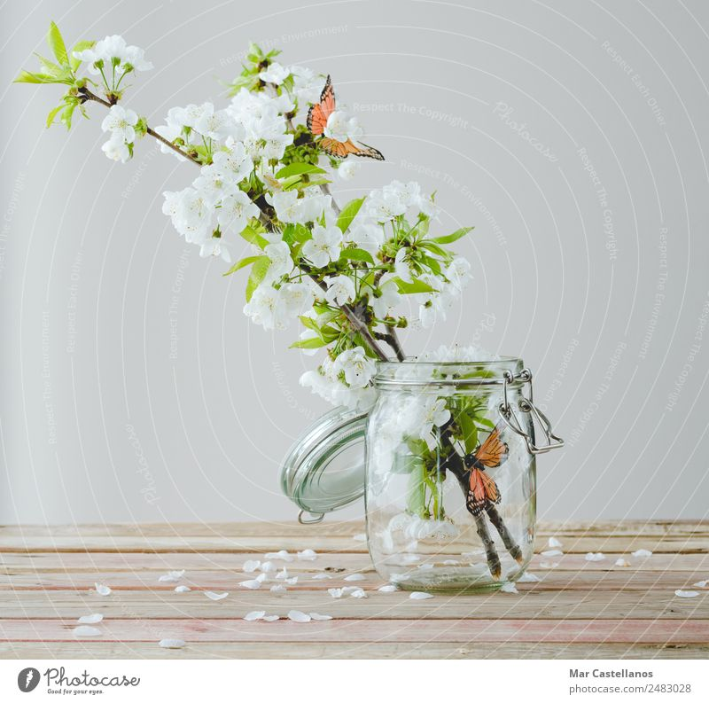 Cherry blossom branch with butterfly ornaments in glass jar Design Beautiful Harmonious Interior design Decoration Table Nature Plant Tree Flower Leaf Blossom