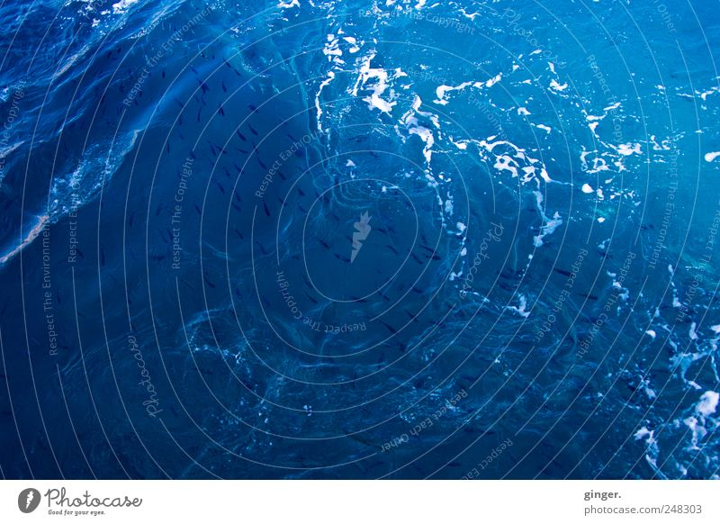 Water Ocean Environment Movement Waves Fish Swimming & Bathing Many Rotate Foam White crest Agitated Swirl Whirlpool Swell Bubble