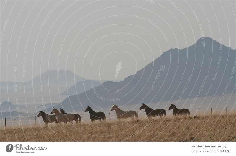 Animal Mountain Horse Stand Group of animals Listening
