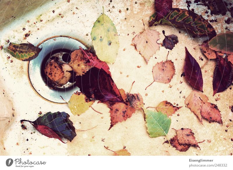 Nature Old White Green Red Plant Yellow Autumn Dirty Gloomy Transience Disgust Hideous Drainage Autumn leaves Sink