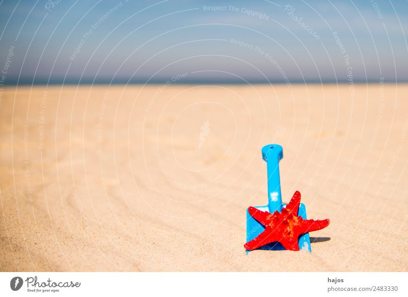 Shovel and starfish on the beach Joy Relaxation Vacation & Travel Summer Beach Child Sand Animal 1 Blue Yellow Red Tourism Children's game play in sand Starfish