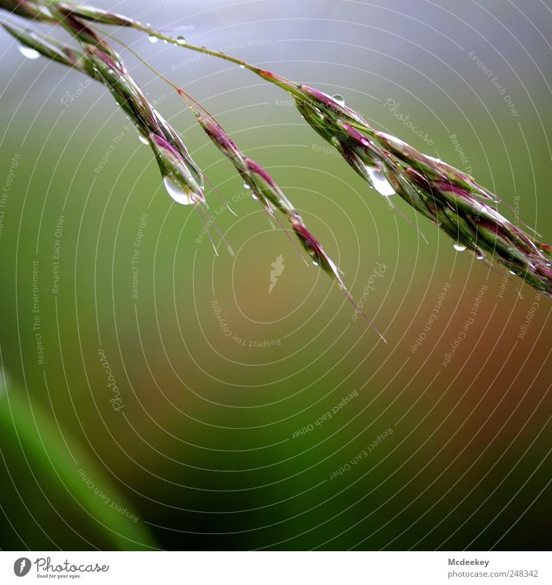natural mirror Environment Nature Landscape Plant Drops of water Summer Fog Grass Blossom Field Wet Natural Clean Point Blue Brown Multicoloured Gray Green