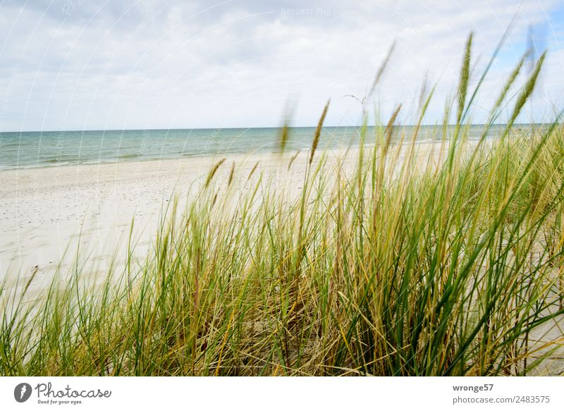 Dune with sea view Freedom Summer Summer vacation Beach Ocean Nature Landscape Plant Sand Air Water Sky Clouds Grass Marram grass Coast Baltic Sea Beach dune