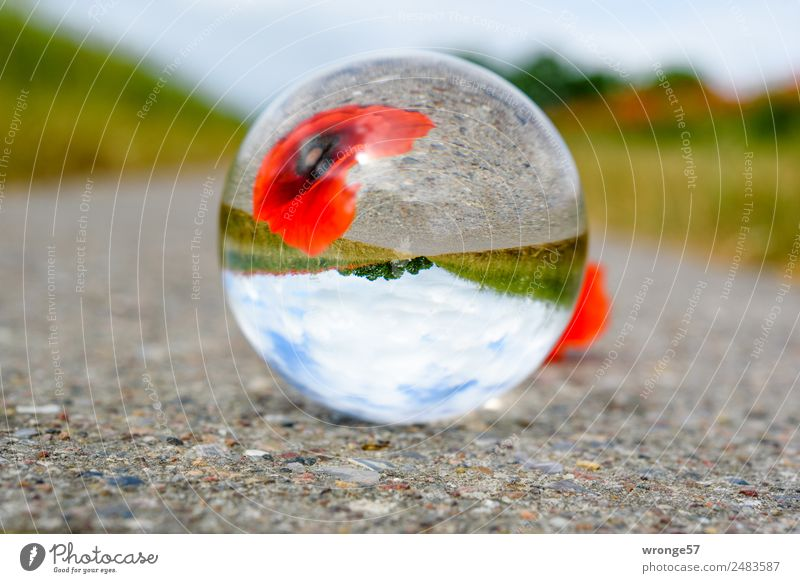 Head Cinema III Summer Summer vacation Nature Plant Earth Sky Clouds Blossom Poppy blossom Field Blue Multicoloured Gray Green Red Crystal ball Landscape