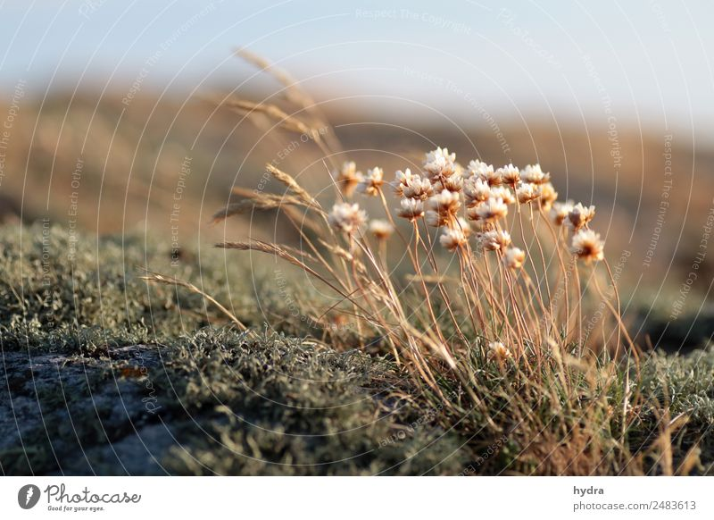 Sky Nature Summer Plant Landscape Relaxation Calm Blossom Natural Coast Grass Rock Growth Beautiful weather Blossoming Climate
