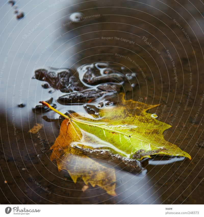 leaf Environment Nature Landscape Water Autumn Leaf Authentic Wet Natural Beautiful Emotions Moody Seasons Colouring Puddle Early fall November mood October
