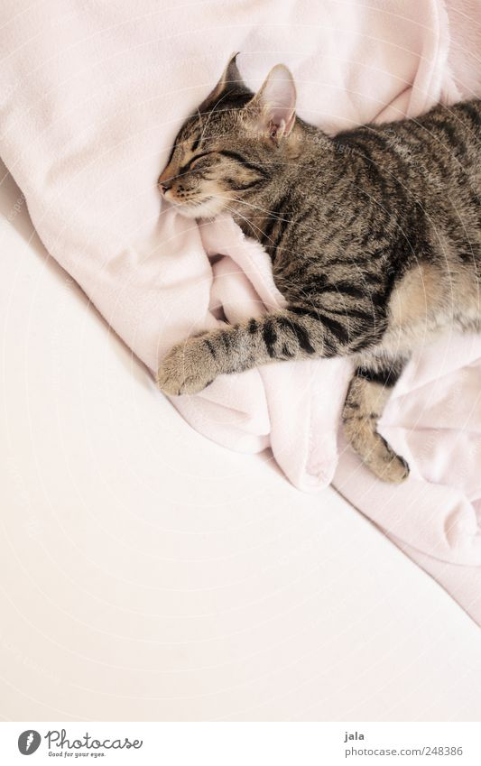 daydreamers Animal Pet Cat Domestic cat 1 Lie Sleep Dream Trust Safety Safety (feeling of) Sympathy Relaxation Colour photo Interior shot Deserted