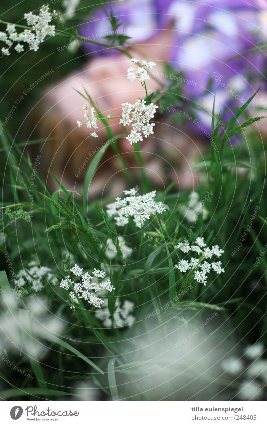 . 1 Human being Summer Plant Flower Foliage plant Meadow Relaxation Lie Near Natural Green Violet White Nature Common Yarrow Blonde Dream Shallow depth of field
