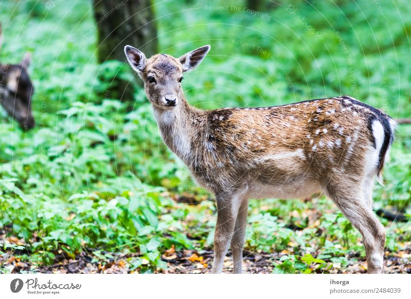 European red deer in the forest in Autumn Nature Beautiful Green Tree Animal Forest Environment Natural Grass Brown Wild Park Wild animal Seasons