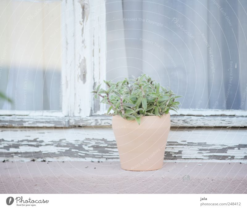 windowsill Plant Pot plant Building Facade Window Esthetic Elegant Pink White Pastel tone Light blue Bright Colour photo Exterior shot Deserted Day