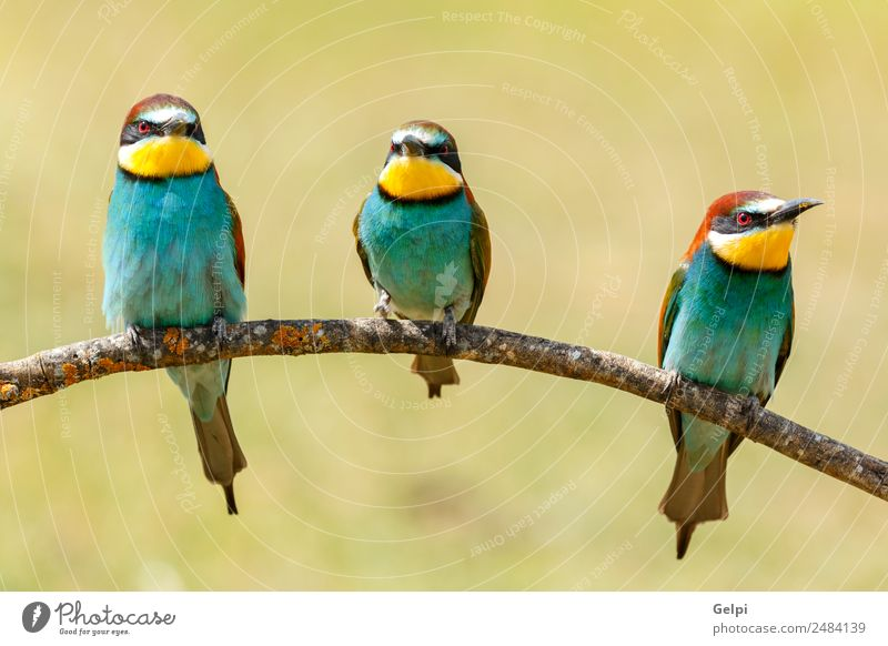 Three birds perched on a branch Nature Blue Beautiful Colour Green White Red Animal Yellow Freedom Bird Friendship Wild Bright Glittering Feather