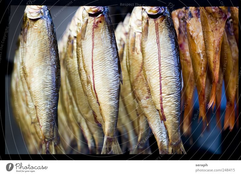Fish Kipper Nutrition Food Smoked suspended Frame Relaxation Fishery Crowd of people hung Markets Market stall preserve Tin of food Canned Delicacy