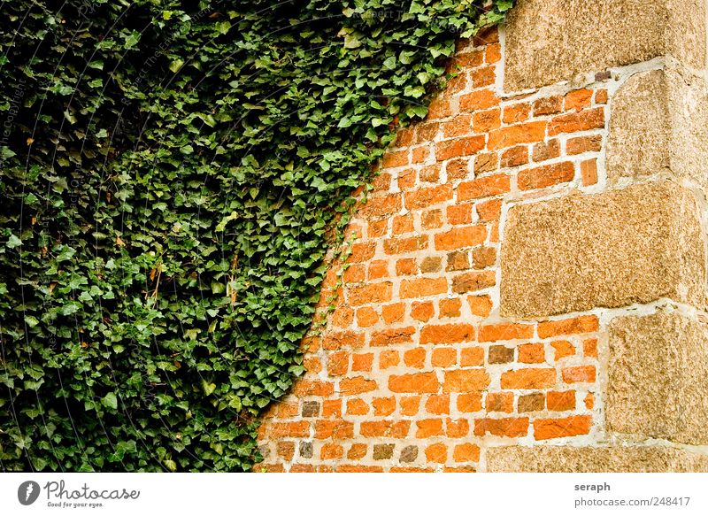 Wall Wall (barrier) stone brick stonewalled House (Residential Structure) Wall (building) Ivy Plant Creeper overgrown Extra Seam Sandstone Abstract Diagonal
