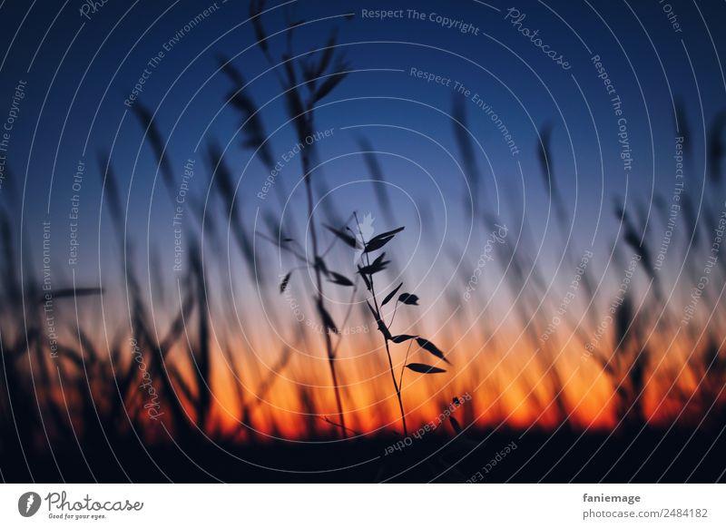couleurs d'été Environment Nature Sky Sunrise Sunset Beautiful weather Plant Field Esthetic Blue Yellow Red Black Camargue Southern France Common Reed Grass