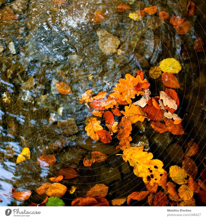autumn Nature Esthetic Autumn Autumn leaves Leaf Transience Autumnal Drops of water Water River Brook Banks of a brook Source Riverbed Oak tree Oak leaf Clarity