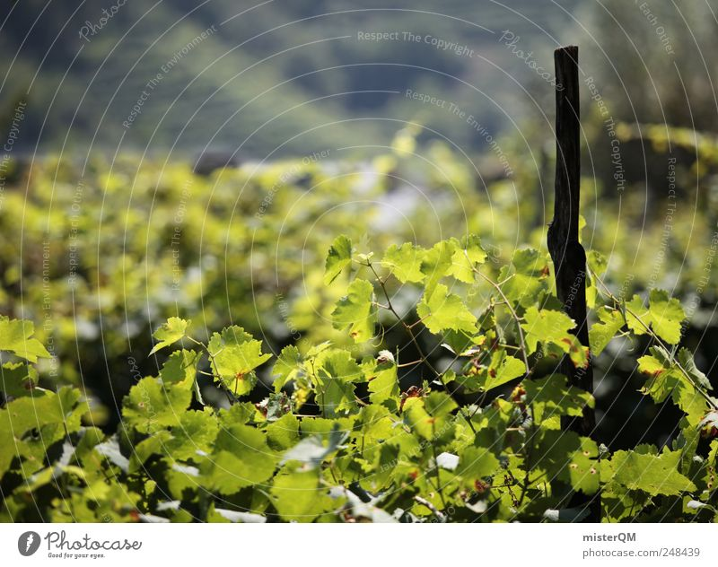 Nature Green Plant Leaf Calm Environment Landscape Esthetic Growth Vine Hill Harvest Mature Tradition Slope Quality