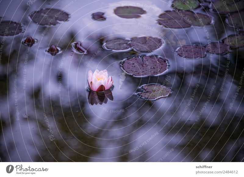 Thought games Grief and Hope Nature Plant Leaf Blossom Garden Pond Dark Water lily Loneliness Sadness Exterior shot Deserted Copy Space right Copy Space bottom