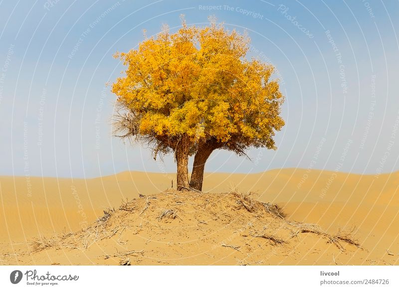 lonely tree in the taklamakan desert, china Relaxation Nature Landscape Sand Sky Clouds Plant Tree Park Loneliness Adventure Experience Vacation & Travel