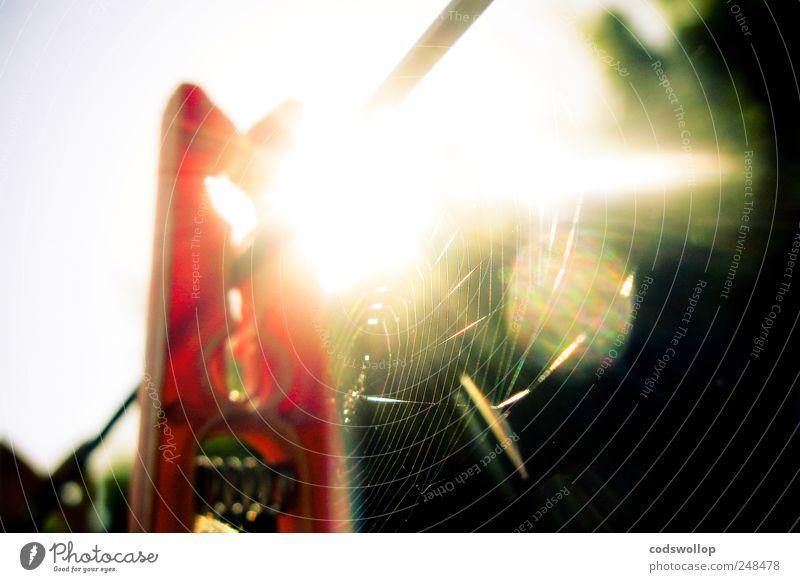 toile d'aurore Garden Esthetic Warmth Expectation Clothesline Clothes peg Household Spider's web Exterior shot Shadow Contrast Light (Natural Phenomenon)