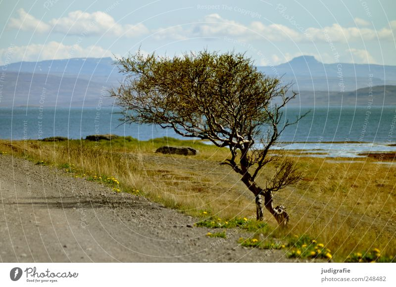 Nature Tree Plant Ocean Mountain Landscape Environment Lanes & trails Growth Wild Natural Hill Iceland Fjord Adjustment Wind cripple