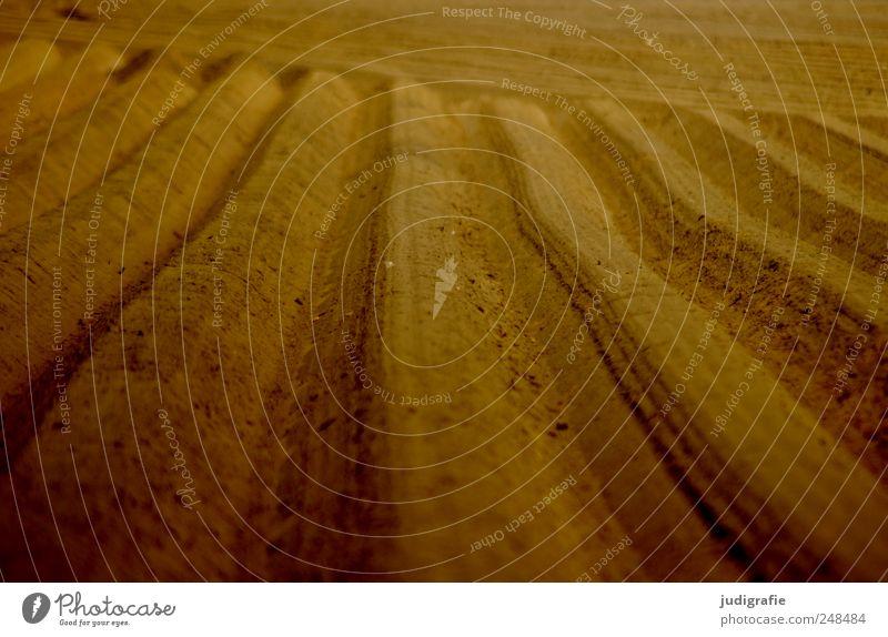 Nature Landscape Line Field Earth Arrangement Agriculture Forestry Plowed Asparagus field