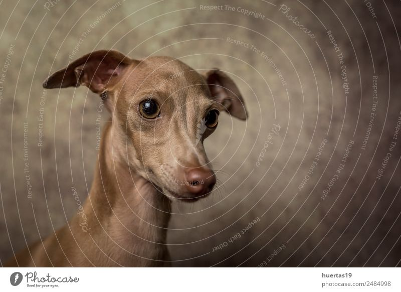Funny Greyhound Pictures With Captions