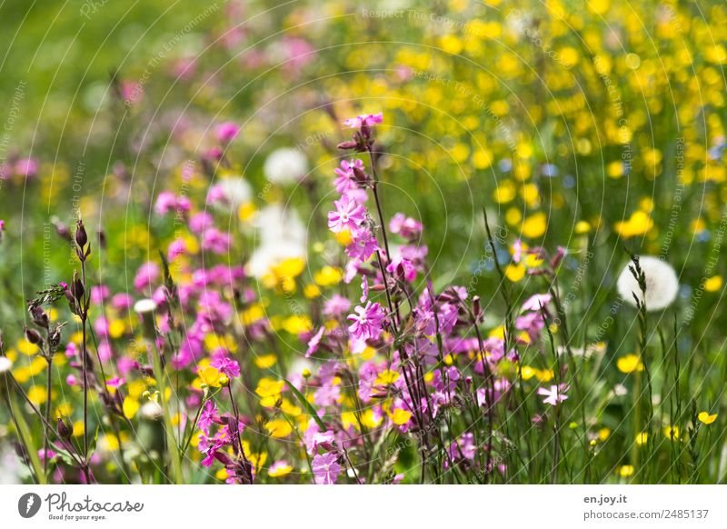 Nature Summer Plant Beautiful Flower Yellow Environment Spring Blossom Meadow Garden Pink Hiking Park Dream Growth
