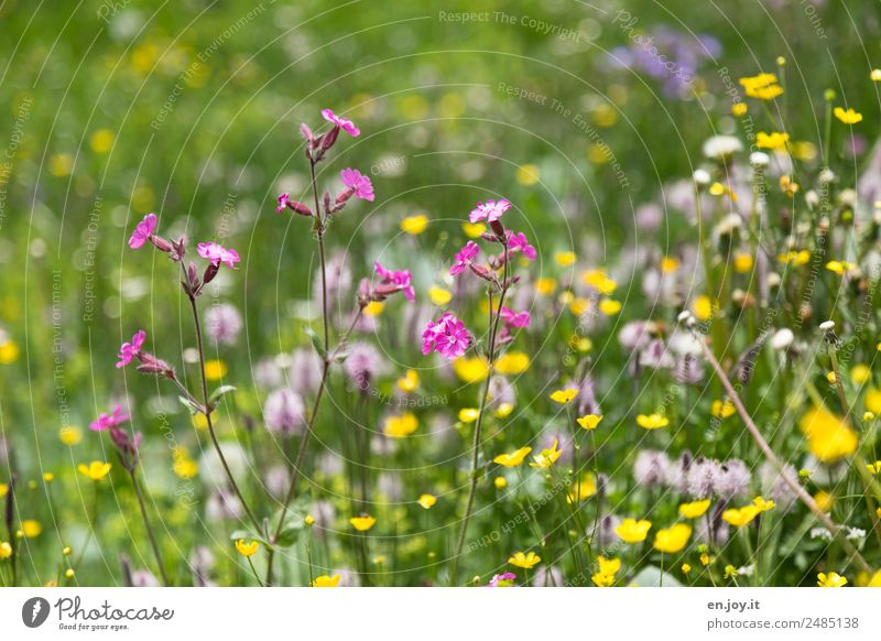 Small but fine Nature Plant Spring Flower Blossom Meadow flower Garden Park Flower meadow Blossoming Fragrance Happiness Beautiful Multicoloured Yellow Pink