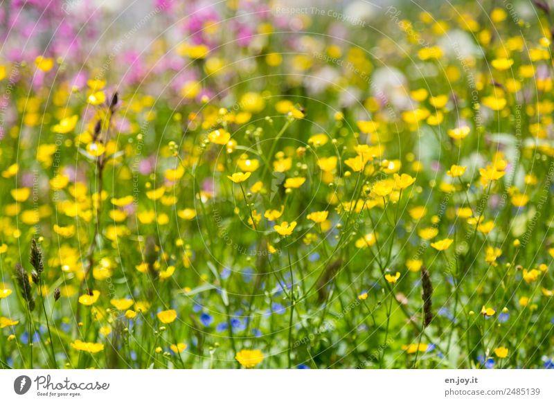 Nature Summer Plant Beautiful Colour Flower Yellow Spring Garden Growth Idyll Happiness Joie de vivre (Vitality) Romance Hope Kitsch