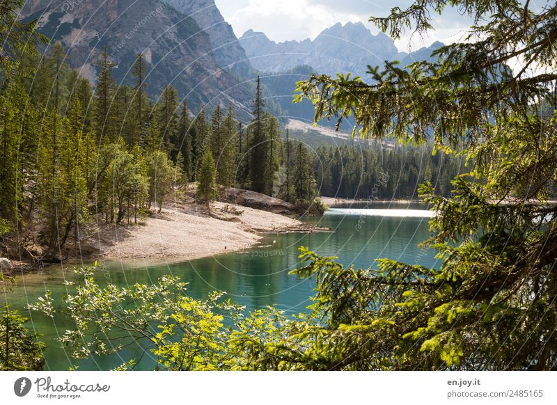Circle Vacation & Travel Trip Adventure Summer Summer vacation Mountain Nature Landscape Tree Fir tree Coniferous trees Forest Rock Alps Dolomites Lakeside