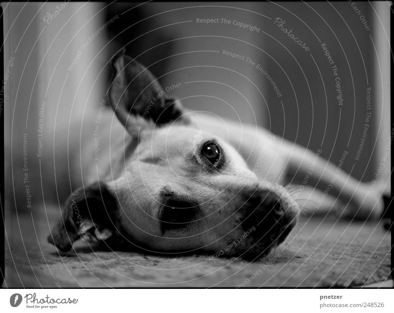 Joy Animal Eyes Relaxation Emotions Happy Dog Friendship Contentment Leisure and hobbies Lie Free Wild Sleep Happiness Sweet