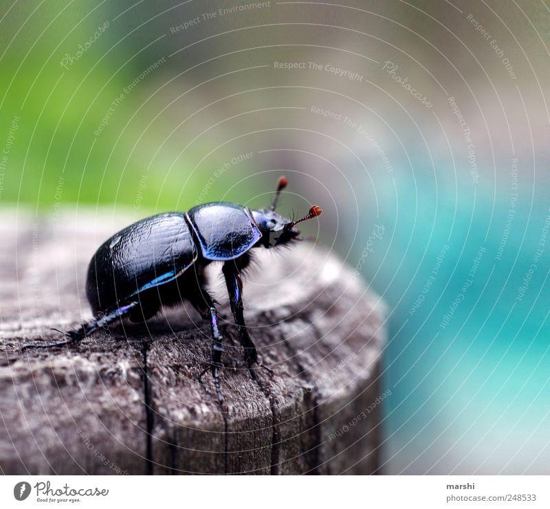 Nature Black Animal Wild animal Insect Beetle Feeler
