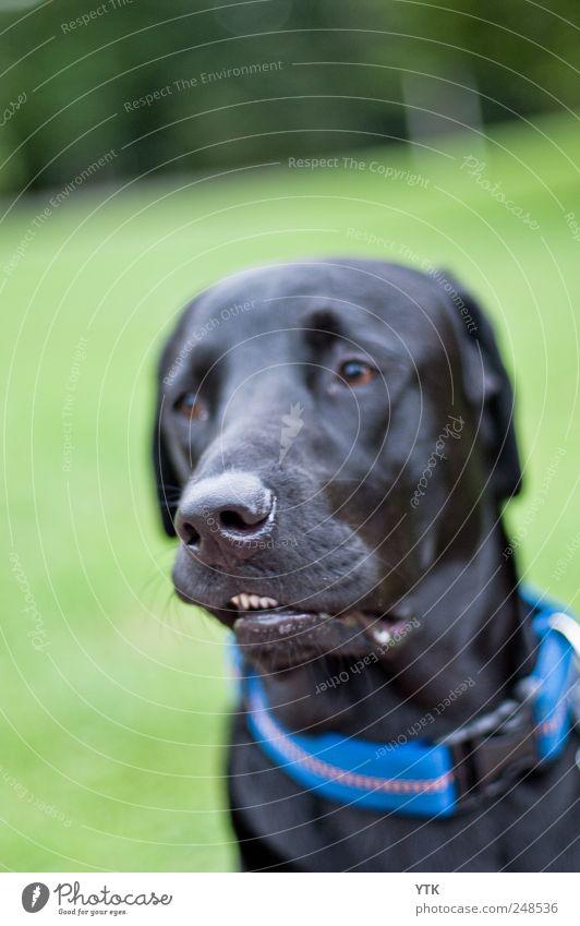 Nature Plant Black Meadow Grass Movement Dog Park Friendship Nose Cool (slang) Retro Teeth Pelt Pet Snout