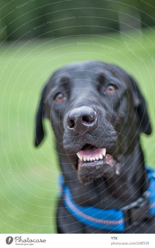 Dog Nature Plant Black Meadow Grass Friendship Park Sit Wait Illuminate Observe Teeth Animal face Set of teeth Connection