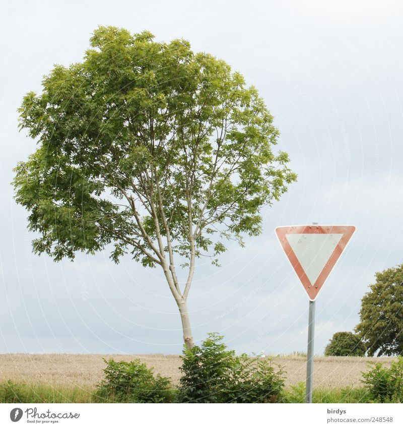 Attention, grant right of way Landscape Summer Tree Field Road sign Sign Signs and labeling Exceptional Green Red Relationship Nature