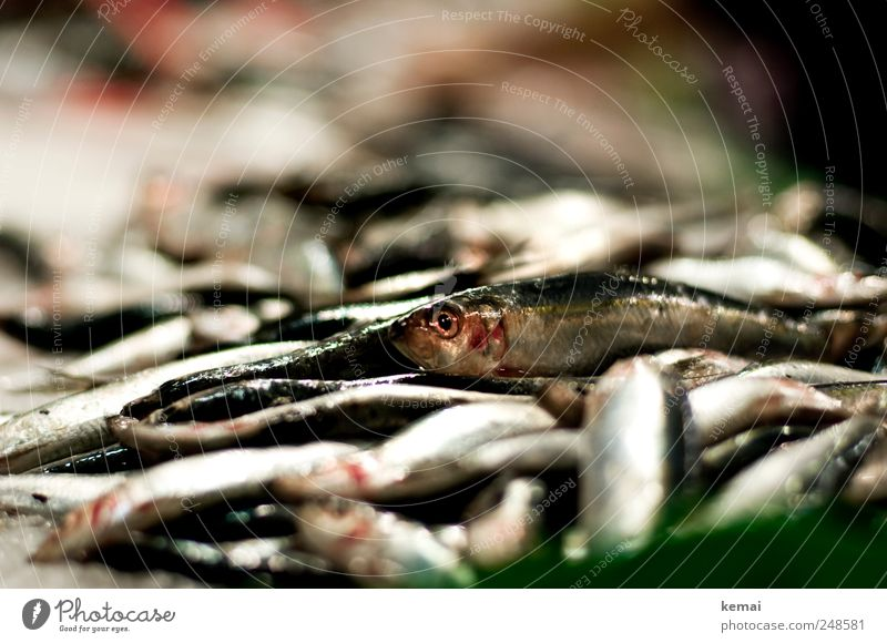 Animal Eyes Nutrition Death Lie Fish Fresh Animal face Dinner Heap Farm animal Seafood Scales Market stall Fish market