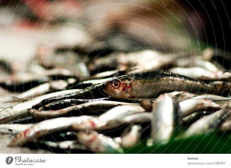 Animal Eyes Nutrition Death Lie Fish Fresh Animal face Dinner Heap Farm animal Seafood Scales Market stall Fish market
