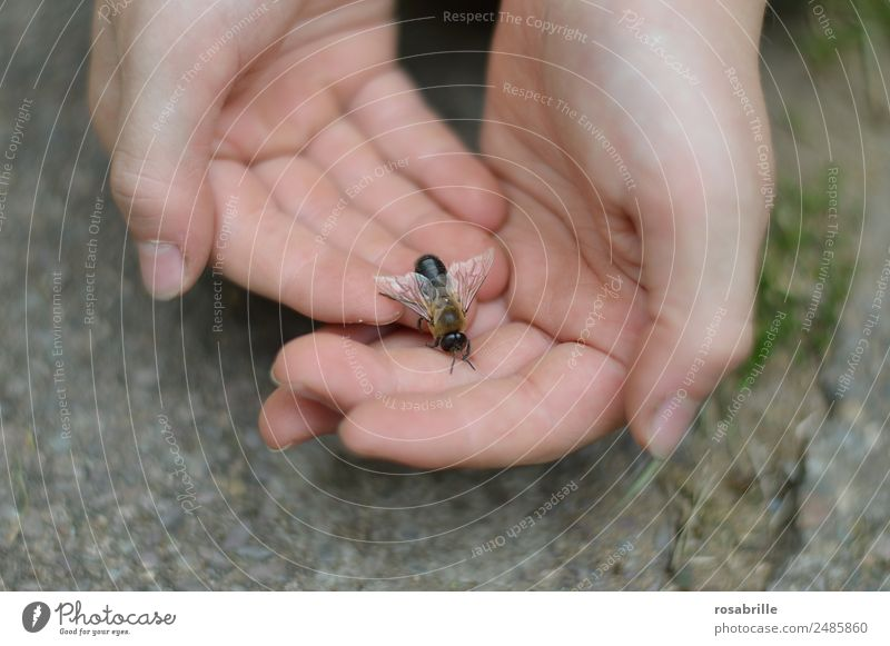 drone landed Human being Child Skin Hand Animal Farm animal Bee Wing Honey bee Masculine Insect 1 Observe Touch Crawl Small Near Trust Love of animals Attentive